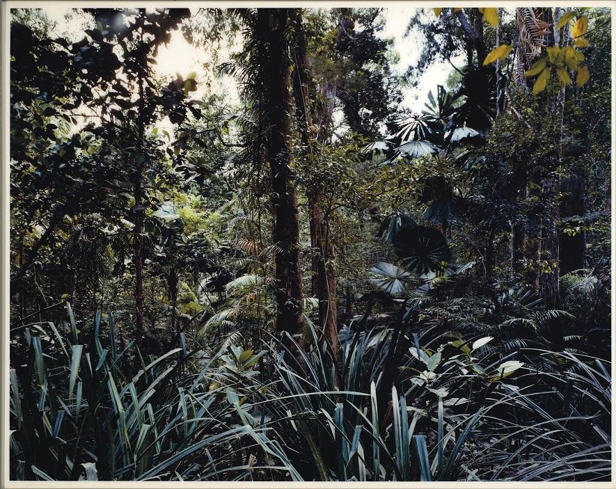 Thomas Struth, Paradise 7, Daintree Australia, 1999, €40,000-60,000