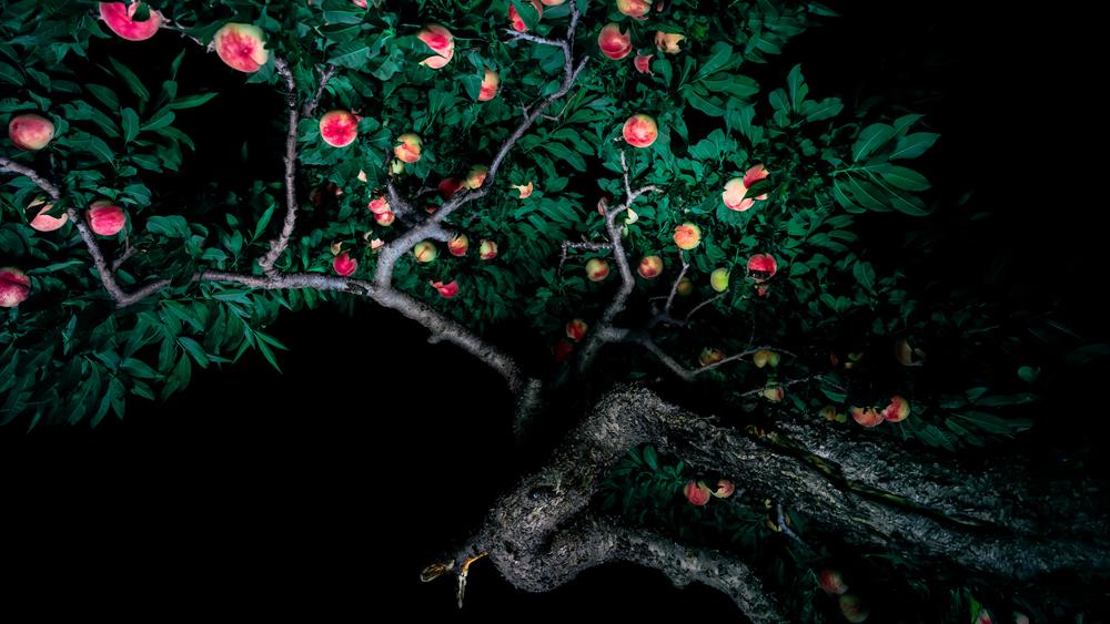 Akatsuki II, Miwa Yanagi 2017 160cm x 285cm  archival pigment print  © Miwa Yanagi, Courtesy Loock Gallery