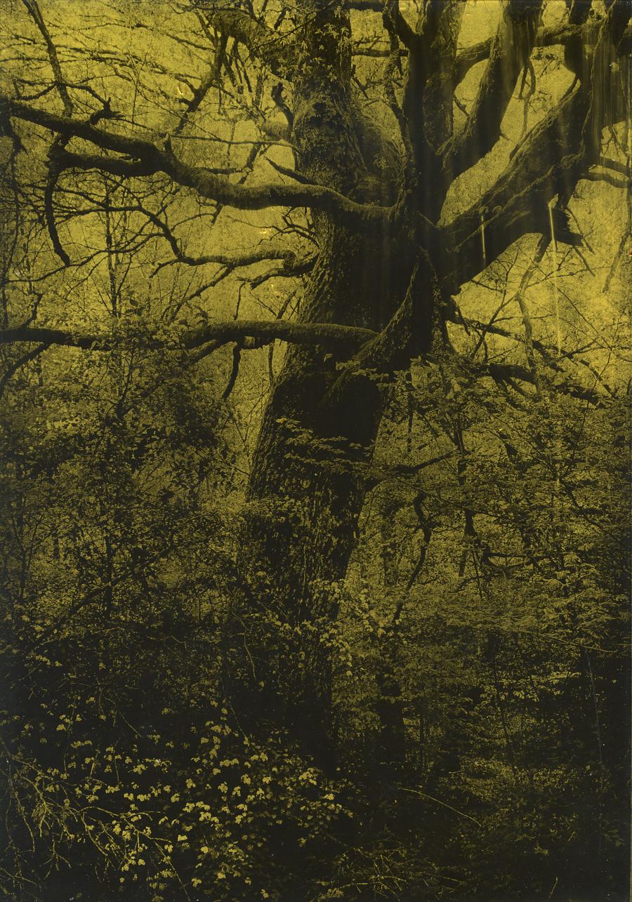 Anaïs Boudot, sans titre (arbre buissons ), série La noche oscura (Épilogue), 2018, courtesy Galerie Binome tirage unique dans une édition de 3 (+1EA) – 30×21 cm tirage argentique sur plaque de verre, peinture dorée, châssis bois noir