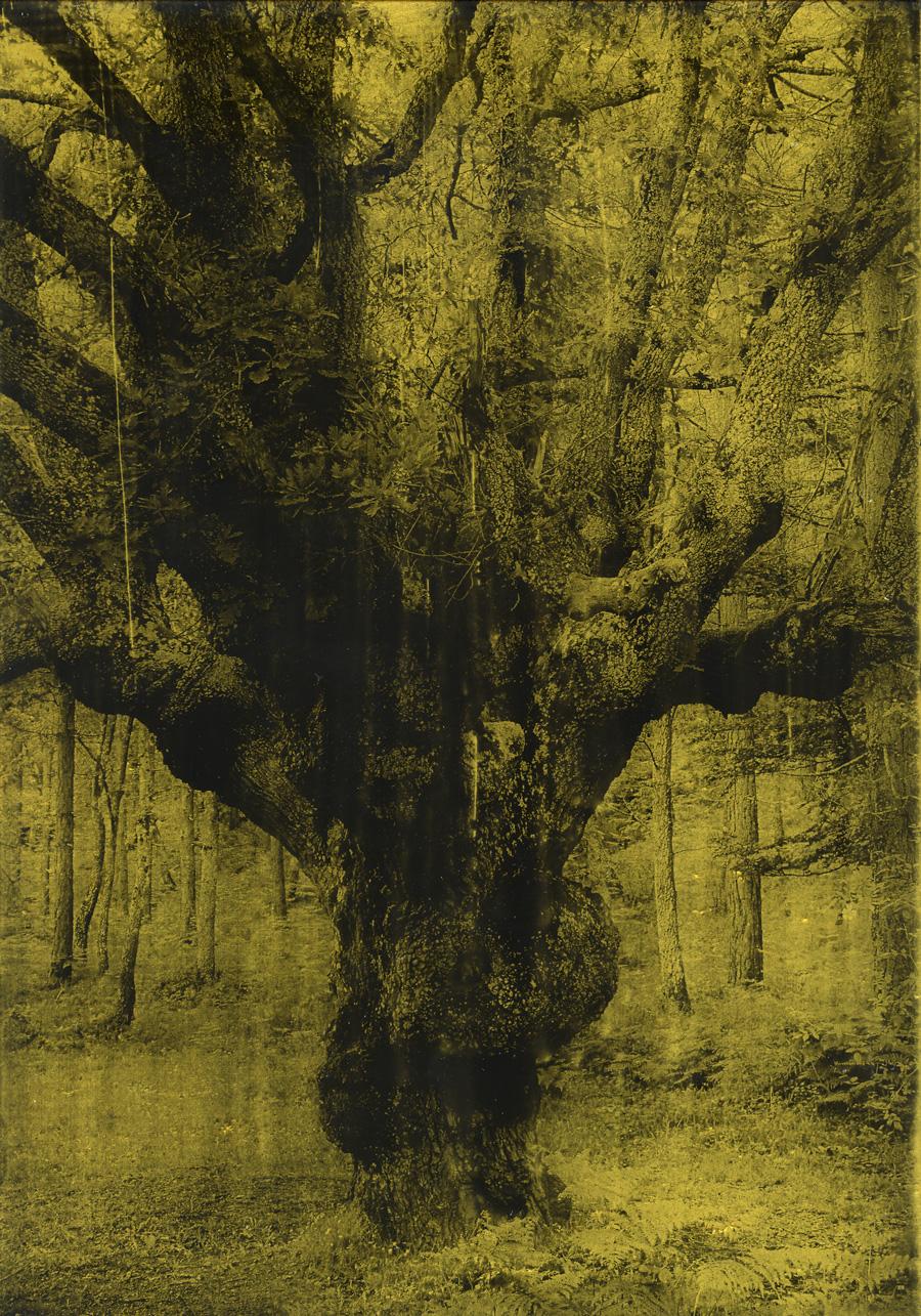 Anaïs Boudot, sans titre (arbre noueux), série La noche oscura (Épilogue), 2018, courtesy Galerie Binome tirage unique dans une édition de 3 (+1EA) – 30×21 cm tirage argentique sur plaque de verre, peinture dorée, châssis bois noir