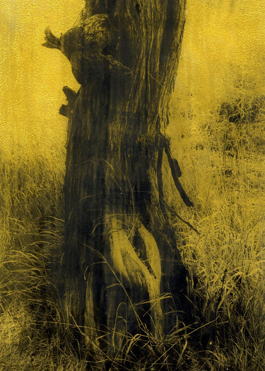 Anaïs Boudot, sans titre (arbre3), série La noche oscura, 2017, courtesy Galerie Binome tirage unique dans une édition de 3 (+2EA) – 30×21 cm tirage argentique sur plaque de verre, peinture dorée, châssis bois projet de résidence Casa de Velazquez 2017