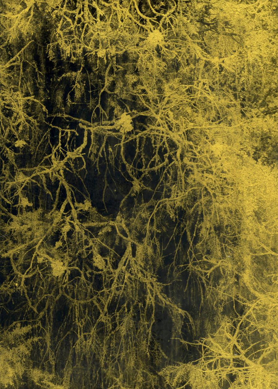 Anaïs Boudot, sans titre (branchage), série La noche oscura, 2017, courtesy Galerie Binome tirage unique dans une édition de 3 (+2EA) – 30×21 cm tirage argentique sur plaque de verre, peinture dorée, châssis bois projet de résidence Casa de Velazquez 2017