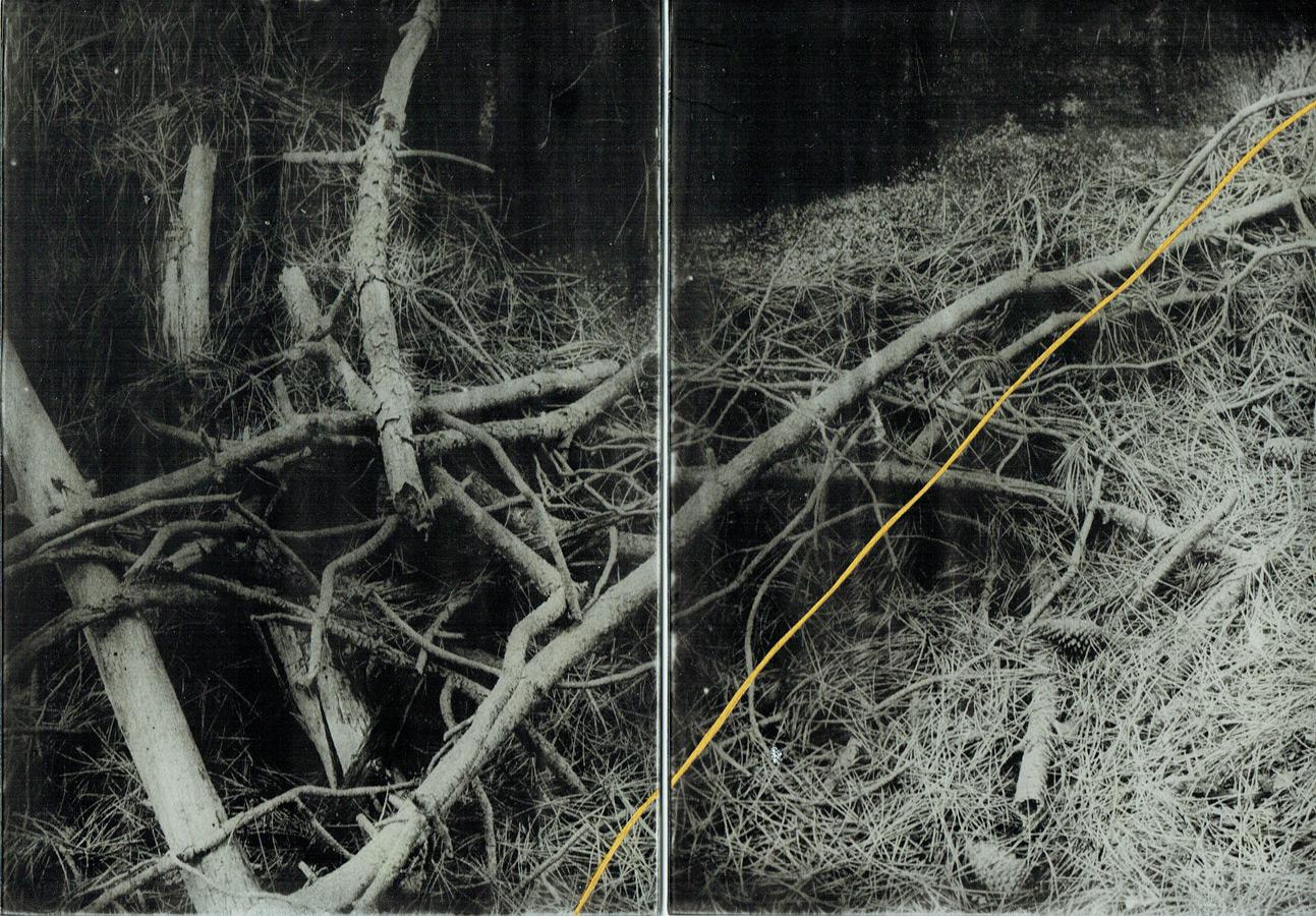 Anaïs Boudot, sans titre (diptyque branches), série La noche oscura, 2017, courtesy Galerie Binome tirage unique dans une édition de 3 (+2EA) – 2×21×15 cm tirage argentique sur plaque de verre, peinture dorée, châssis bois projet de résidence Casa de Velazquez 2017