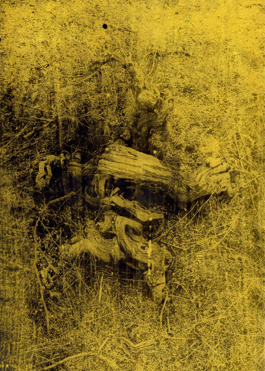 Anaïs Boudot, sans titre (racine2), série La noche oscura, 2017, courtesy Galerie Binome tirage unique dans une édition de 3 (+2EA) – 30×21 cm tirage argentique sur plaque de verre, peinture dorée, châssis bois projet de résidence Casa de Velazquez 2017