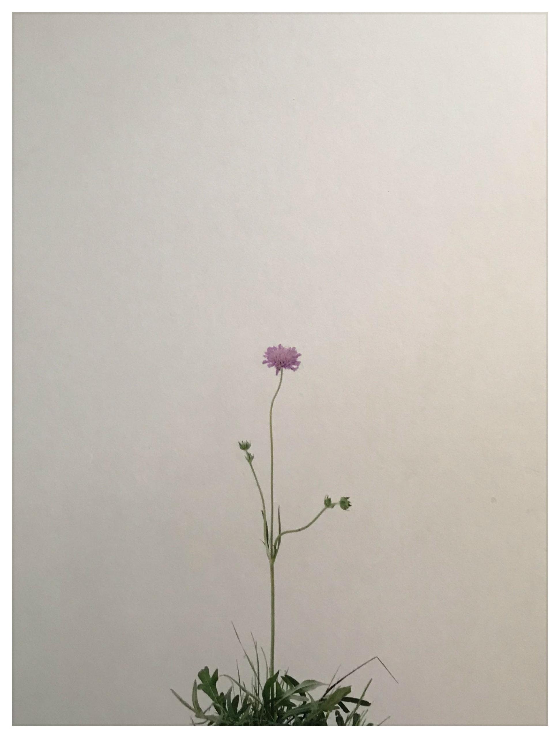 Eric Poitevin, courtesy galerie Dilecta.
