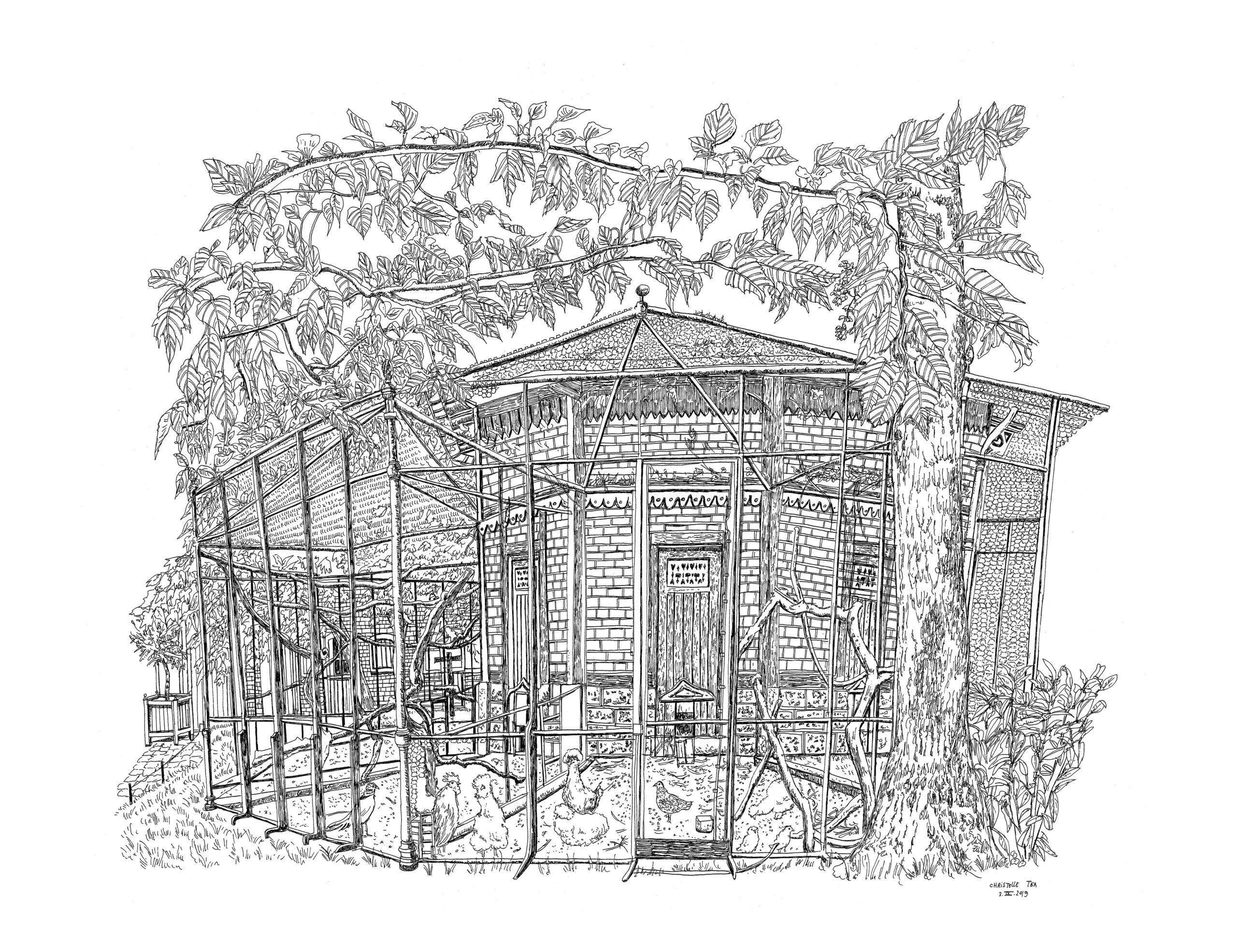 Les poules, les poussins, le coq et faisan, Volière, Propriété Caillebotte,Yerres, 3.IX.2019. Encre de Chine sur papier, 50 x 65 cm.