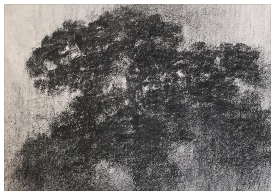 """ALEXANDRE HOLLAN L'espace dans la forme, """"Le grand Chêne dansant"""" (2017) fusain sur papier – H 60 x L 80 cm"""
