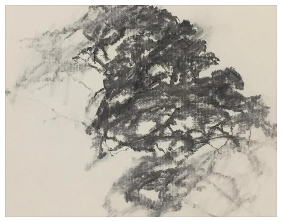 """ALEXANDRE HOLLAN L'arbre dans l'espace, """"Le solitaire"""" (2016) Fusain sur papier – H 40 x L 50 cm"""