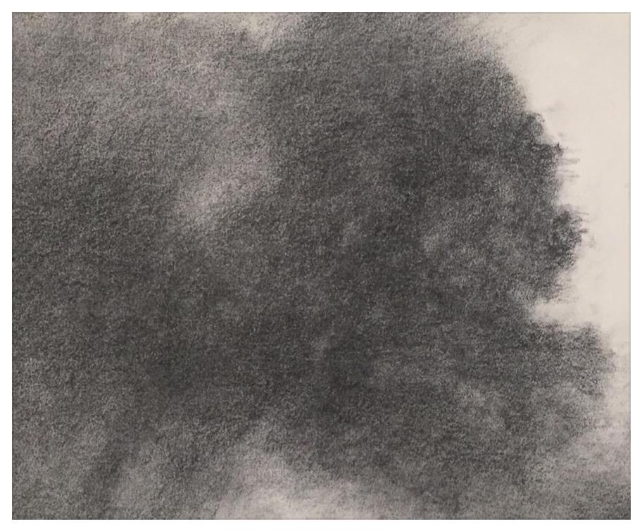 """ALEXANDRE HOLLAN Arbre dans son espace,"""" Le Groupe des quatre, chêne vert"""" (2020) fusain sur papier – H 60 x L 80 cm"""
