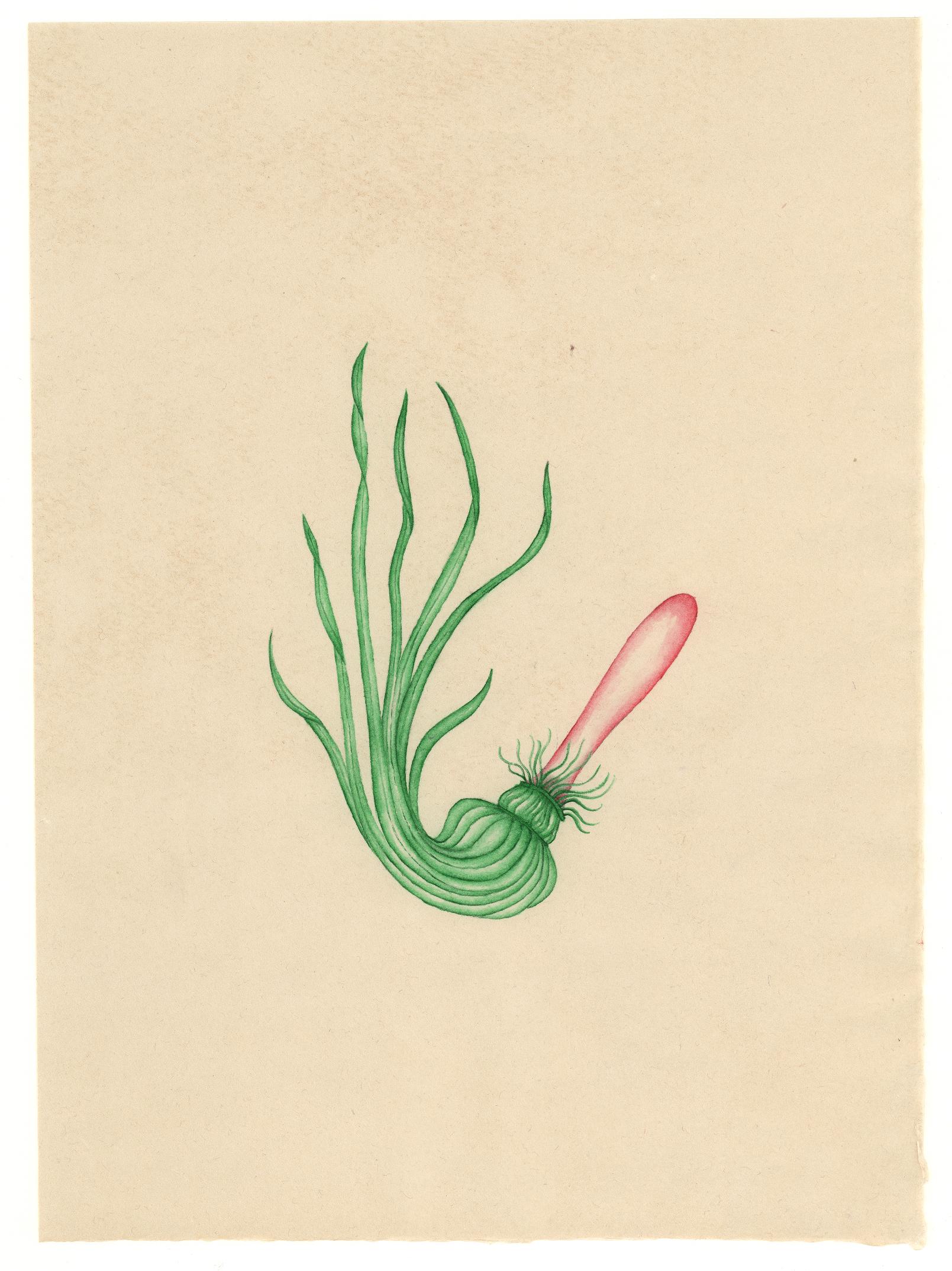 Laure Tixier_Herbier de mauvaises graines (10), Jonc fleuri, Marais du Val d'Yèvre_2021_25 x 35 cm_Aquarelle sur papier vélin,Exhibition view MATRIOCHKAS, ANALIX FOREVER, mars 2021