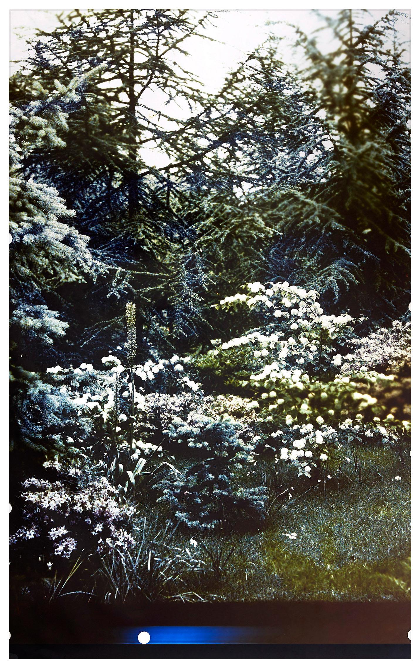 série Jardin secret, 2019, courtesy Galerie Binome